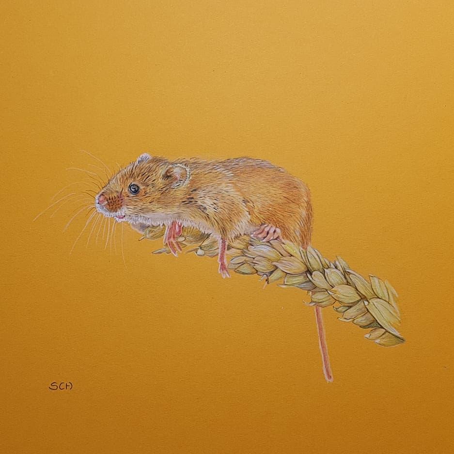 Klein muisje betrapt bij de oogst. Absloluut mijn favoriet op dit moment.